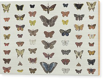 A Collage Of Butterflies And Moths Wood Print by French School