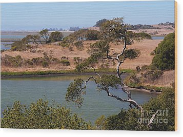Wood Print featuring the photograph A Cove In Late Summer At Elkhorn Slough by Susan Wiedmann