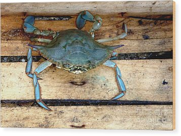 A Crab In A Wooden Box Wood Print by Olga R