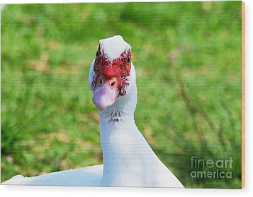 Wood Print featuring the photograph A Curious Muscovy Duck  by Susan Wiedmann