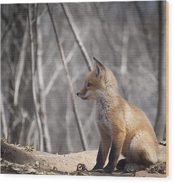 A Cute Kit Fox Portrait 2 Wood Print by Thomas Young