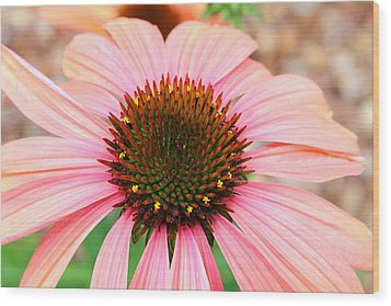 Wood Print featuring the photograph A Daisy For You by Elizabeth Budd