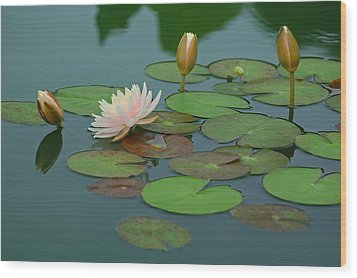 A Day At The Lily Pond Wood Print