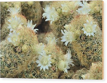 A Desert Floral Wood Print by JC Findley