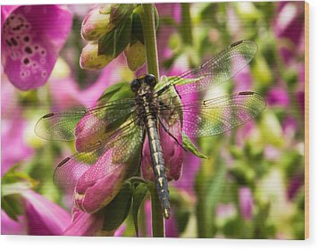 A Dragon Fly Resting In A Forest Of Foxgloves Wood Print by Thomas Pettengill