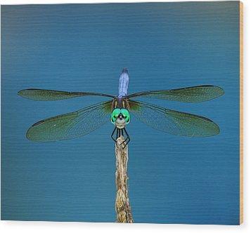 A Dragonfly IIi Wood Print by Raymond Salani III