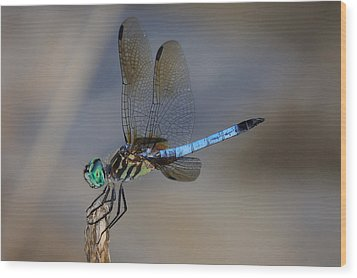 A Dragonfly Iv Wood Print