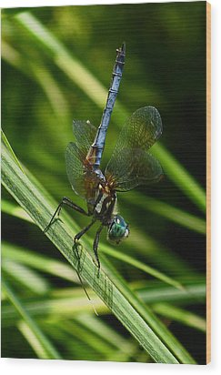 Wood Print featuring the photograph A Dragonfly by Raymond Salani III