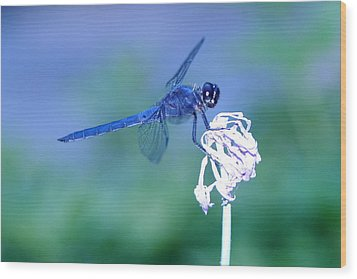 A Dragonfly V Wood Print by Raymond Salani III