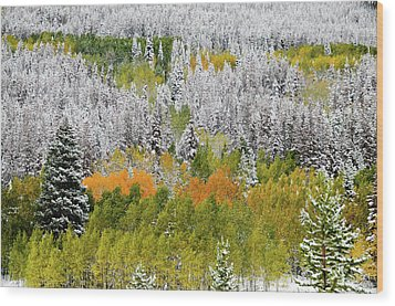 Wood Print featuring the photograph A Dusting Of Snow by Geraldine Alexander