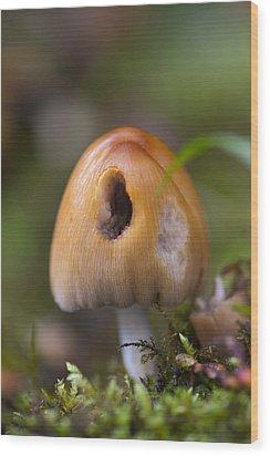 A Fairytale Mushroom Wood Print by Sarah Crites