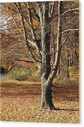 A Fall Tree In New England Wood Print by Mike McCool
