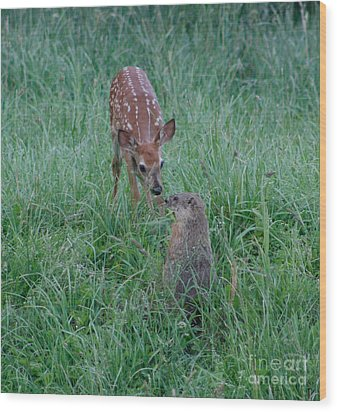 A Fawn And A Woodchuck Wood Print
