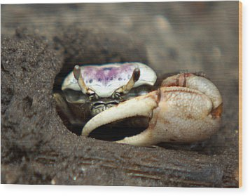 A Fiddler Crab Around Hilton Head Island Wood Print