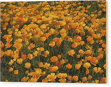 A Field Of Poppies Wood Print by Phyllis Denton