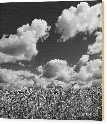 A Field Of Wheat . Limagne. Auvergne. France Wood Print by Bernard Jaubert