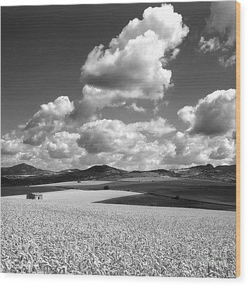 A Field Of Wheat. Limagne. Auvergne. France Wood Print by Bernard Jaubert