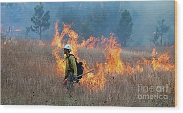 A Firefighter Ignites The Norbeck Prescribed Fire. Wood Print by Bill Gabbert