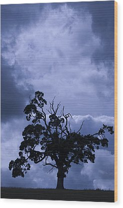 Wood Print featuring the photograph A Flash Of Blue Tree by Sally Ross