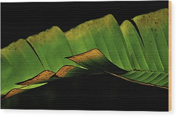 A Floating Heliconia Leaf Wood Print