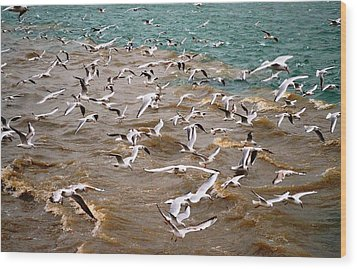 A Flock Of Seagulls Wood Print