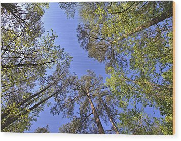 A Forest Sky Wood Print by Gordon Elwell