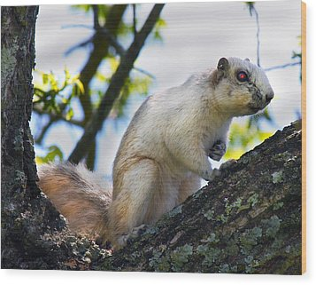 A Fox Squirrel Pauses Wood Print by Betsy Knapp