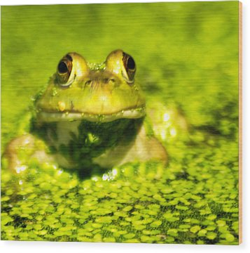 A Frogs Day Wood Print by Optical Playground By MP Ray