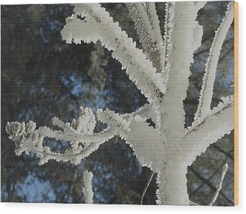 A Frosty Morning Wood Print