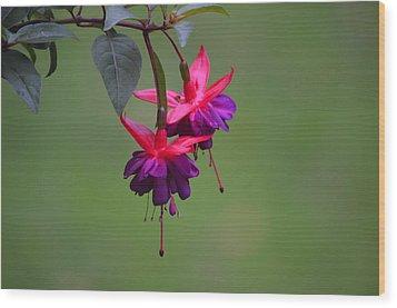 A Fuchsia Wood Print