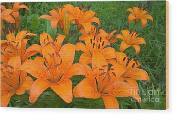 A Garden Full Of Lilies Wood Print
