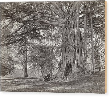 A Gentleman Sitting Beneath A Large Native Tree In British Ceylon Wood Print by Scowen and Co