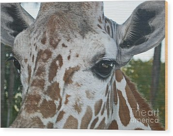 A Giraffe In Close Up Wood Print