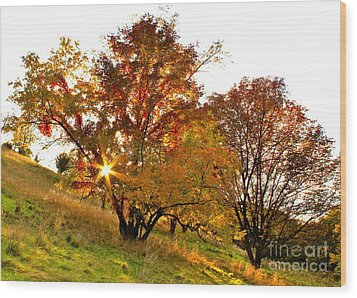 Wood Print featuring the photograph A Golden Glowing Autumn Sunset by Jay Nodianos