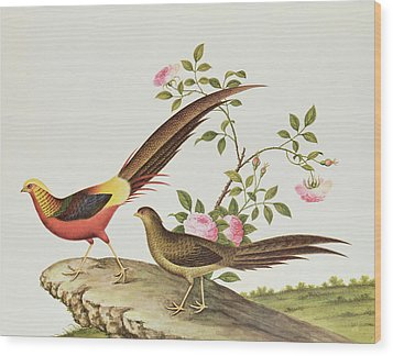 A Golden Pheasant Wood Print by Chinese School