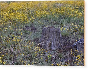 Wood Print featuring the photograph A Good Thinking Spot by Ruth Jolly