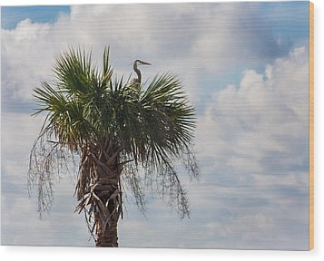 A Great Blue Heron Nests On A Cabbage Palmetto Wood Print by Karen Stephenson
