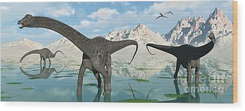 A Group Of Diplodocus Dinosaurs Grazing Wood Print by Mark Stevenson