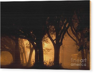 A Grove Of Trees Surrounded By Fog And Golden Light Wood Print