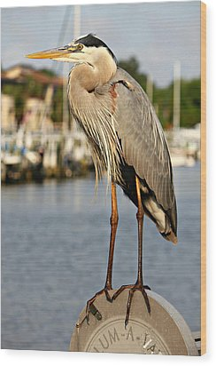 A Heron In The Marina Wood Print