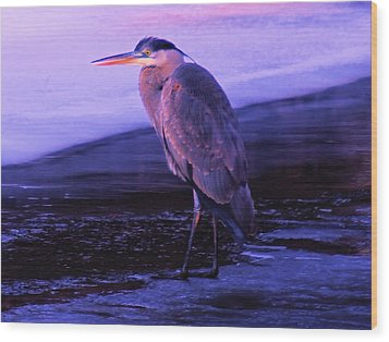 A Heron On The Moyie River Wood Print by Jeff Swan