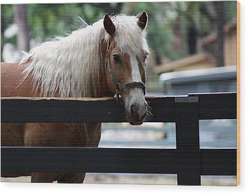 A Hilton Head Island Horse Wood Print by Kim Pate