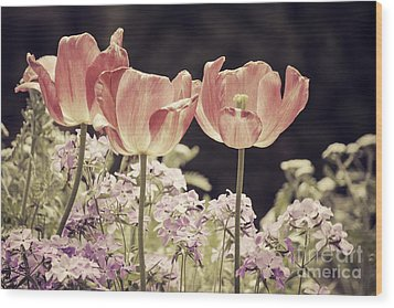 A Hint Of Blush Wood Print by Emily Kay