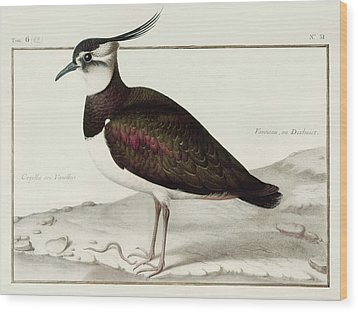A Lapwing Wood Print by Nicolas Robert