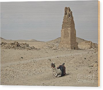 Wood Print featuring the photograph A Lonely Camel by Cendrine Marrouat