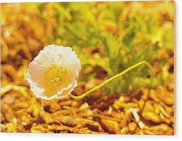 A Long Stemmed Flower Wood Print by Jeff Swan