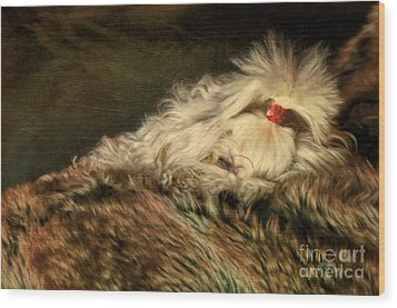 A Long Winter's Nap Wood Print by Lois Bryan