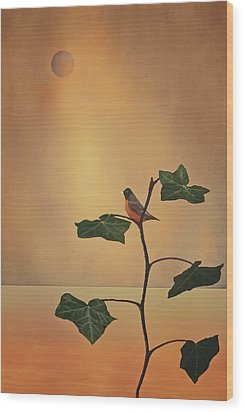 A Moment Of Zen Wood Print by Tom York Images