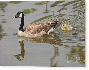 A Mother's Love Wood Print by Bob and Jan Shriner
