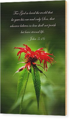 A Mountain Flower  John 3 16 Wood Print by Randall Branham